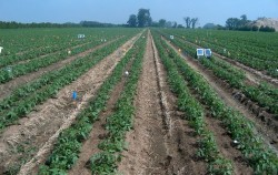 How to Schedule Drip Irrigation System