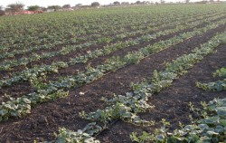 Advantages of Drip Irrigation